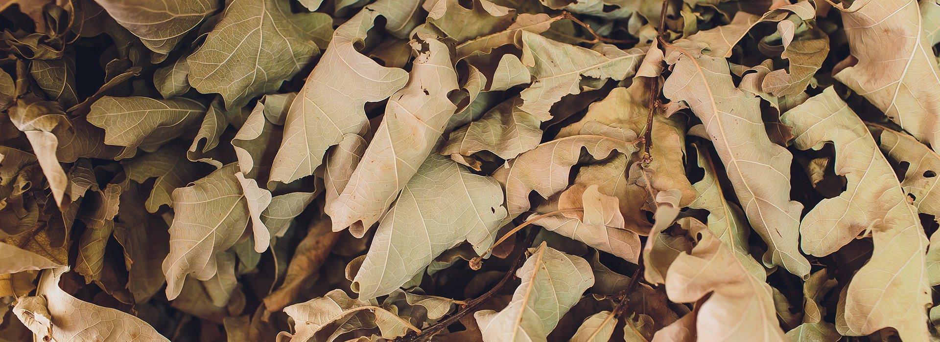 Банный лист