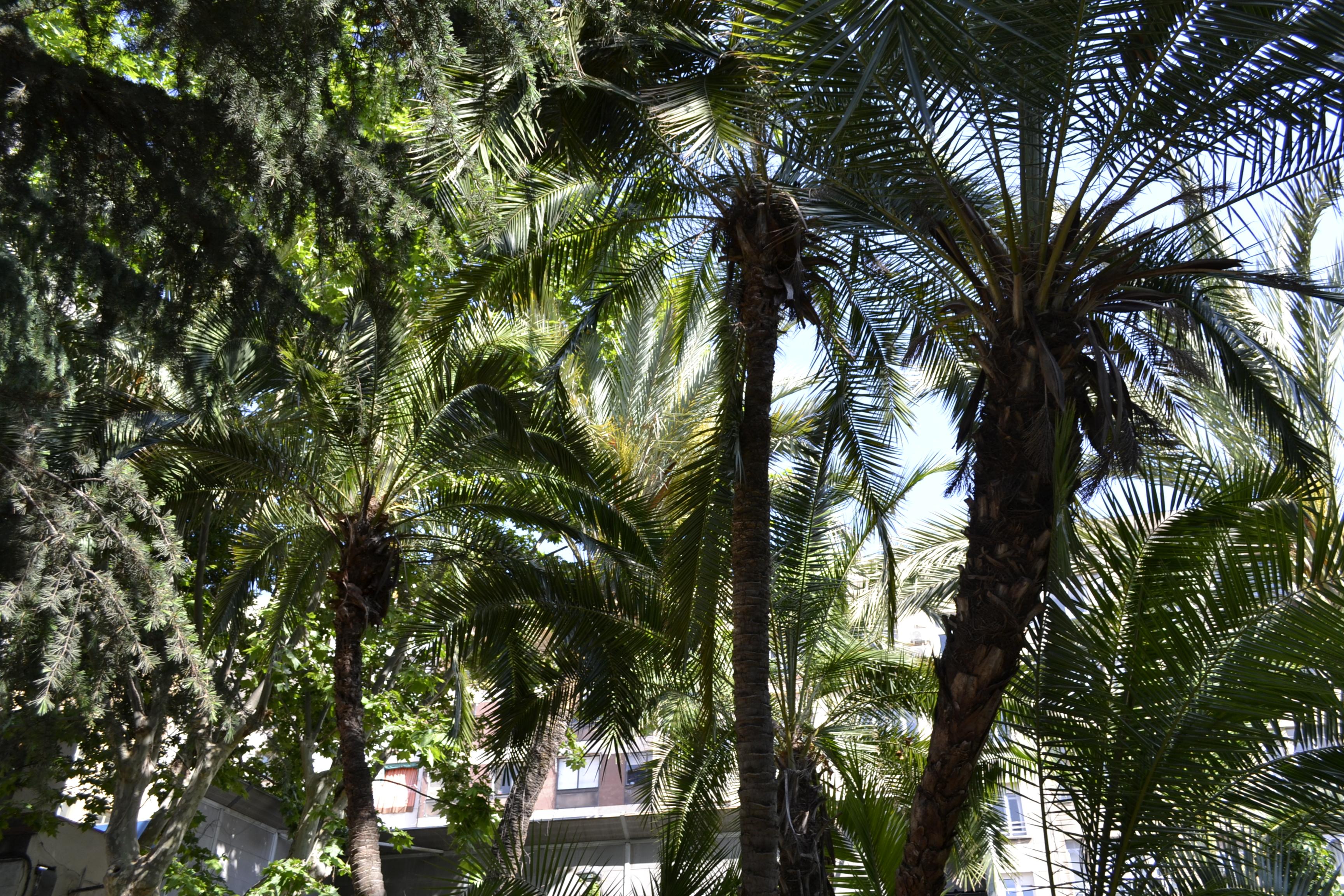Jardins del Palau Robert