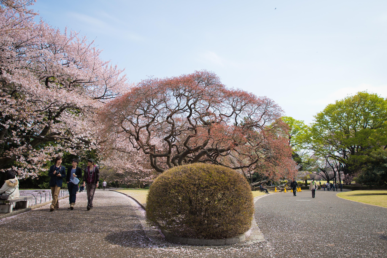 Лабиринты Токио