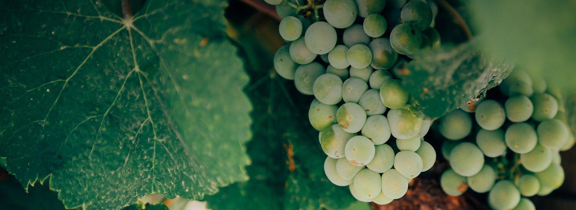 Крафт-вино