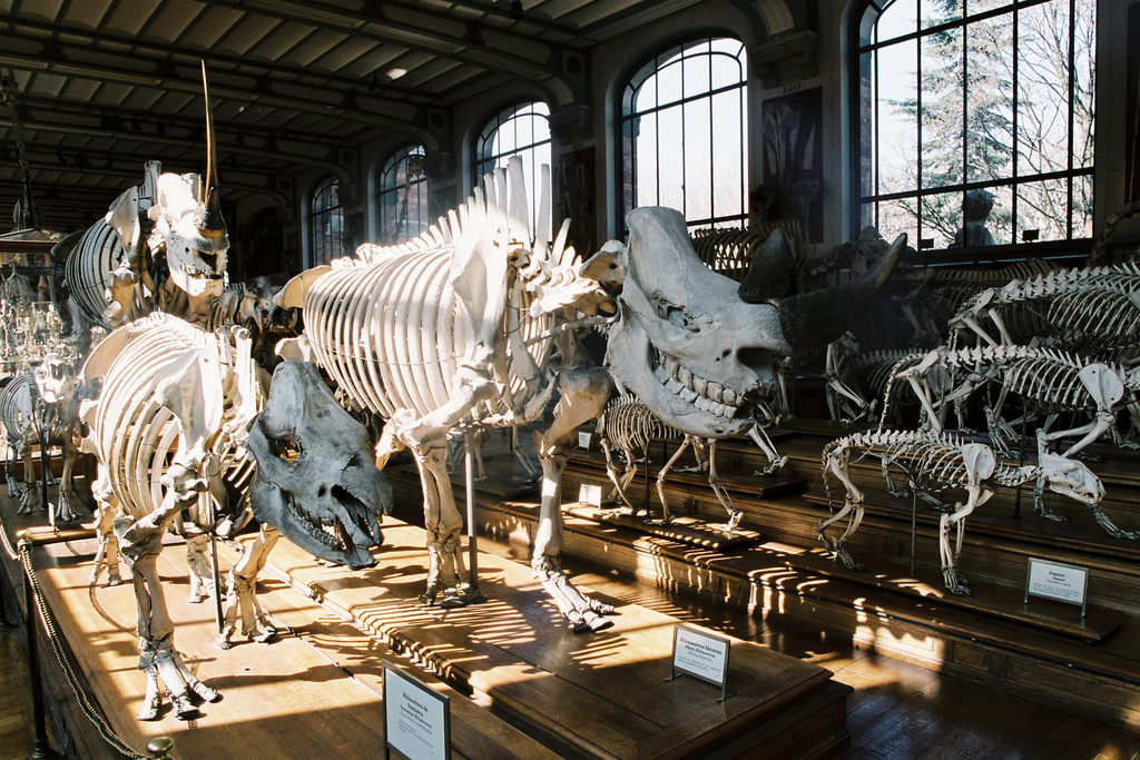 Galerie de paléontologie et d'anatomie comparée