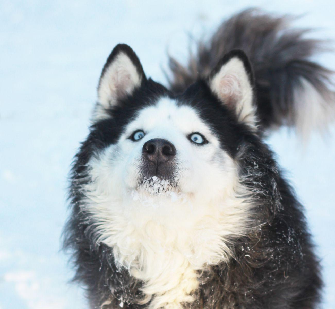 Питомник собак «К-9»