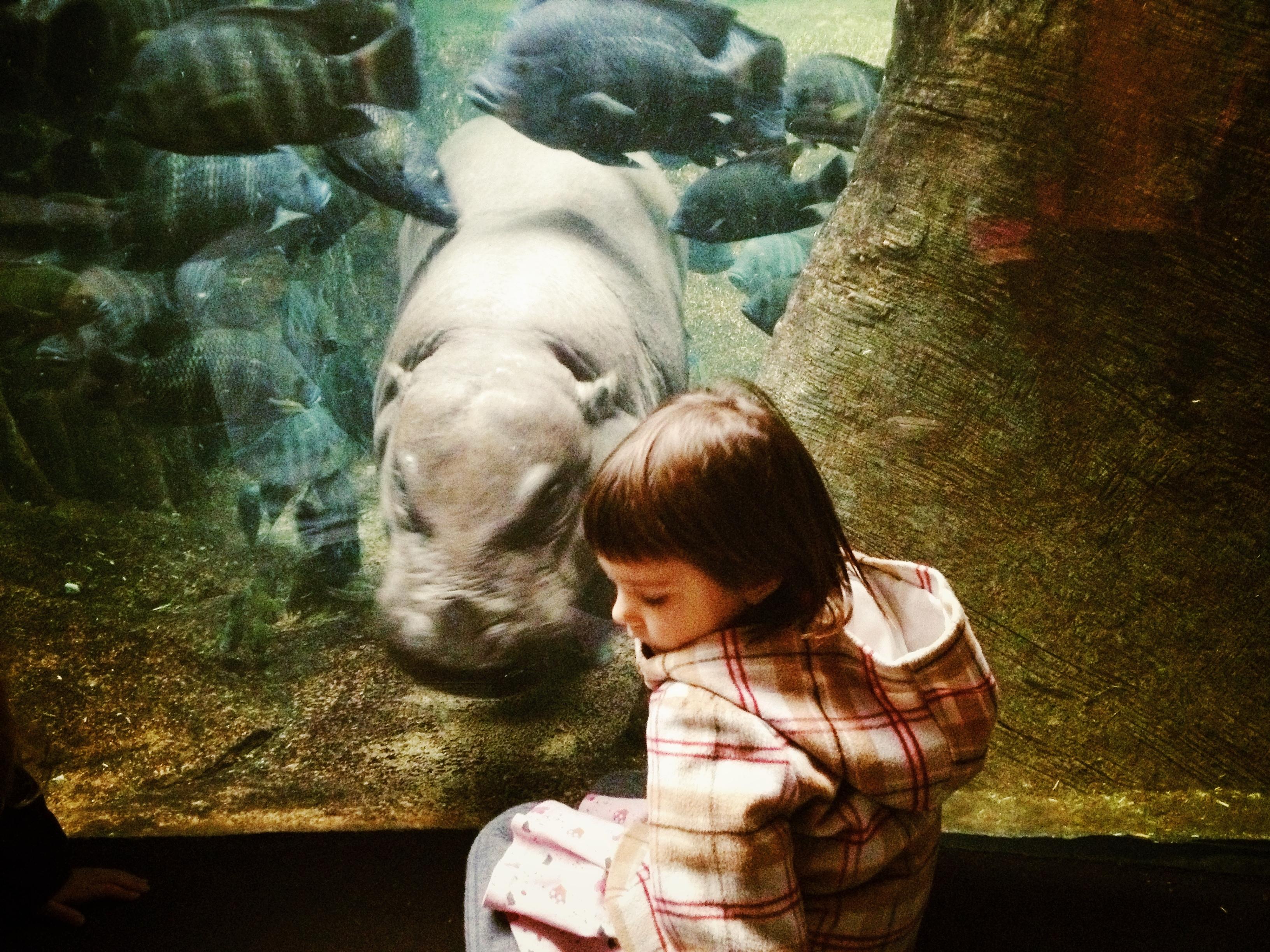 Chicago Zoo