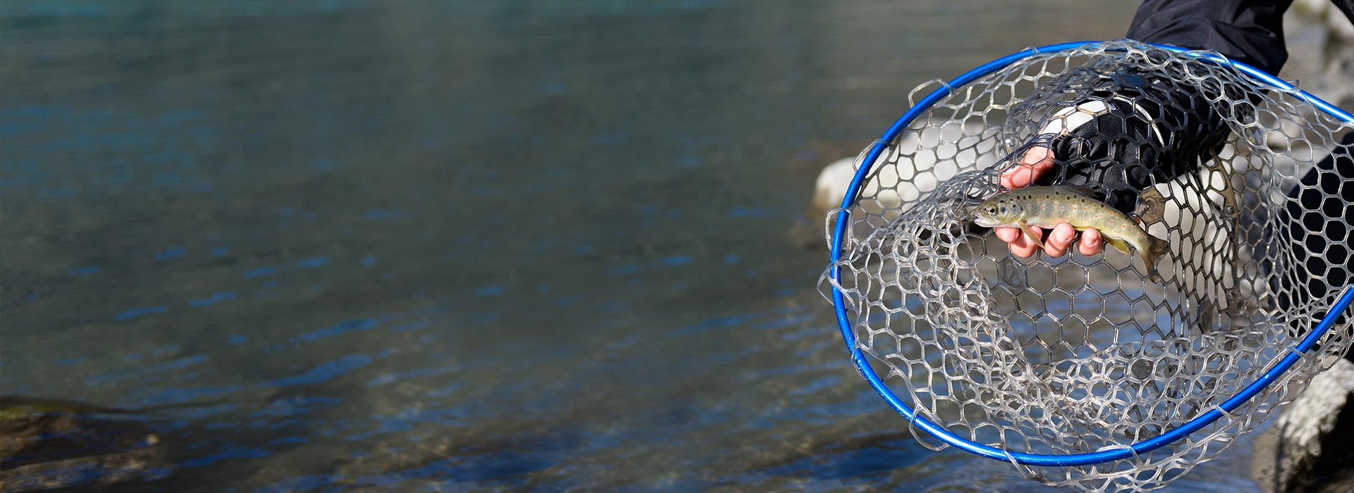 Рыба моей мечты