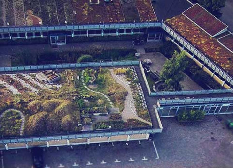 Ботанический сад `Зеленые крыши`