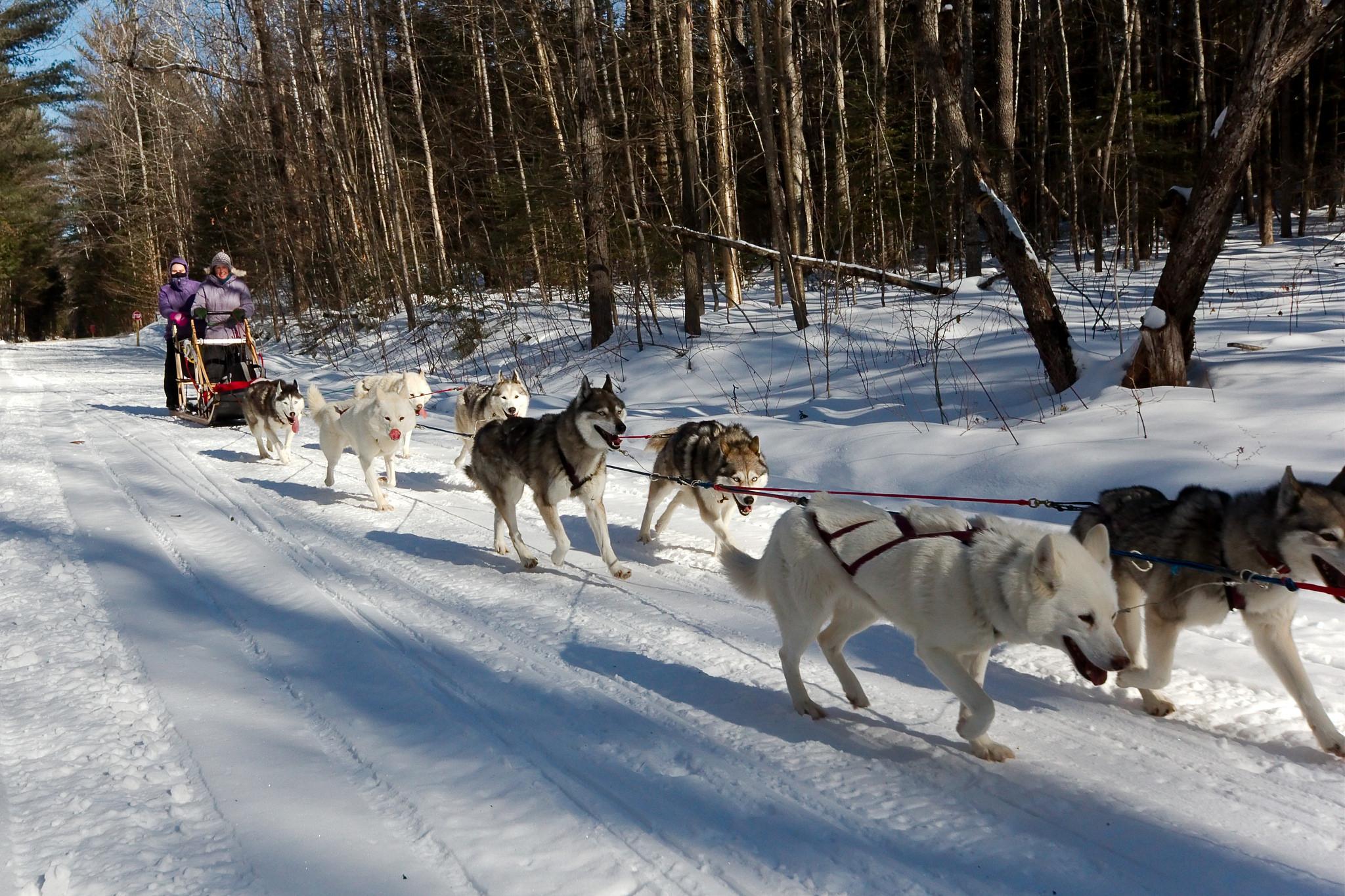 Собачьи упряжки на Главной аллее ВВЦ