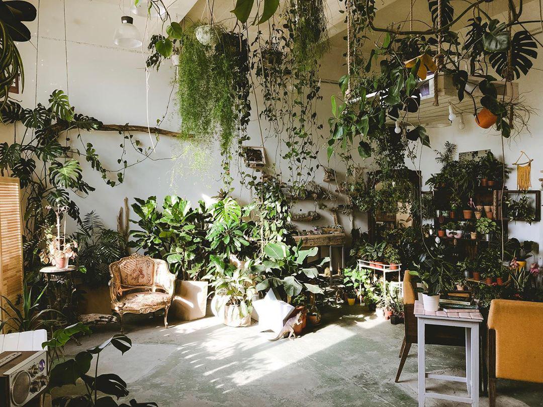 Шоурум растений Antas